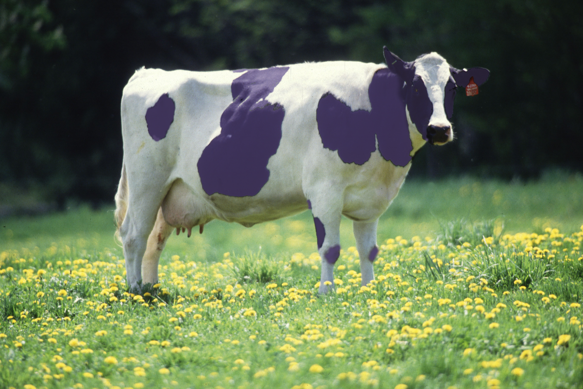The purple cow of government policy